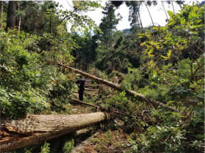 鋸山台風被災状況1