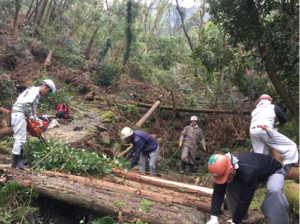 車力道倒木伐採11月3日